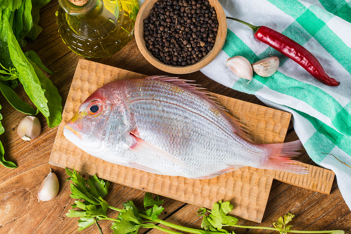 Amazing fish from Mediterranean sea